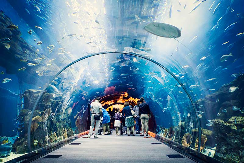 10 interesting facts about dubai mall aquarium
