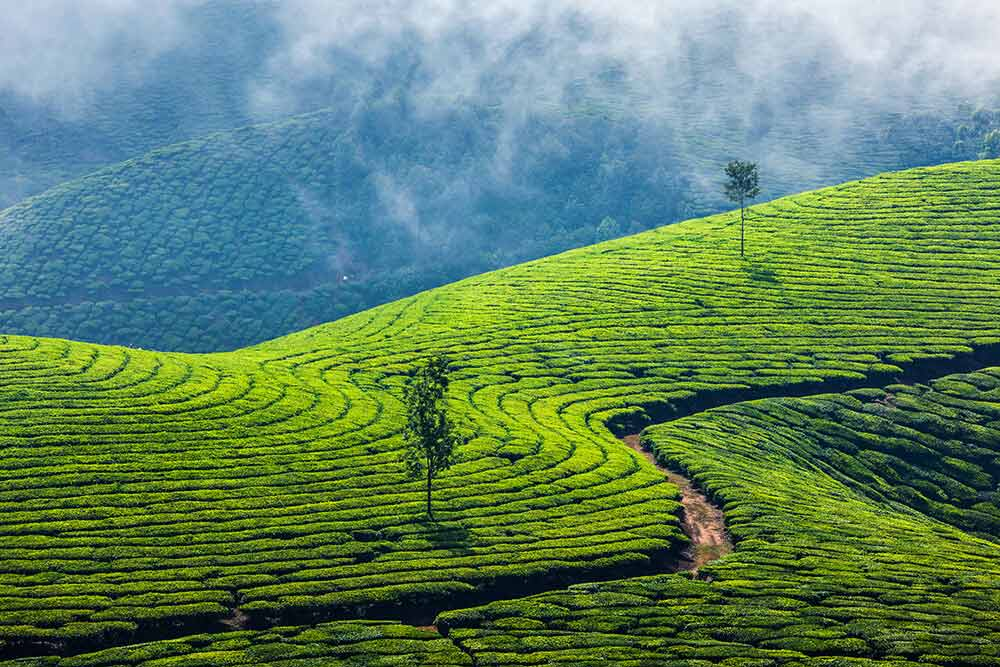 Romancing with the clouds in Munnar