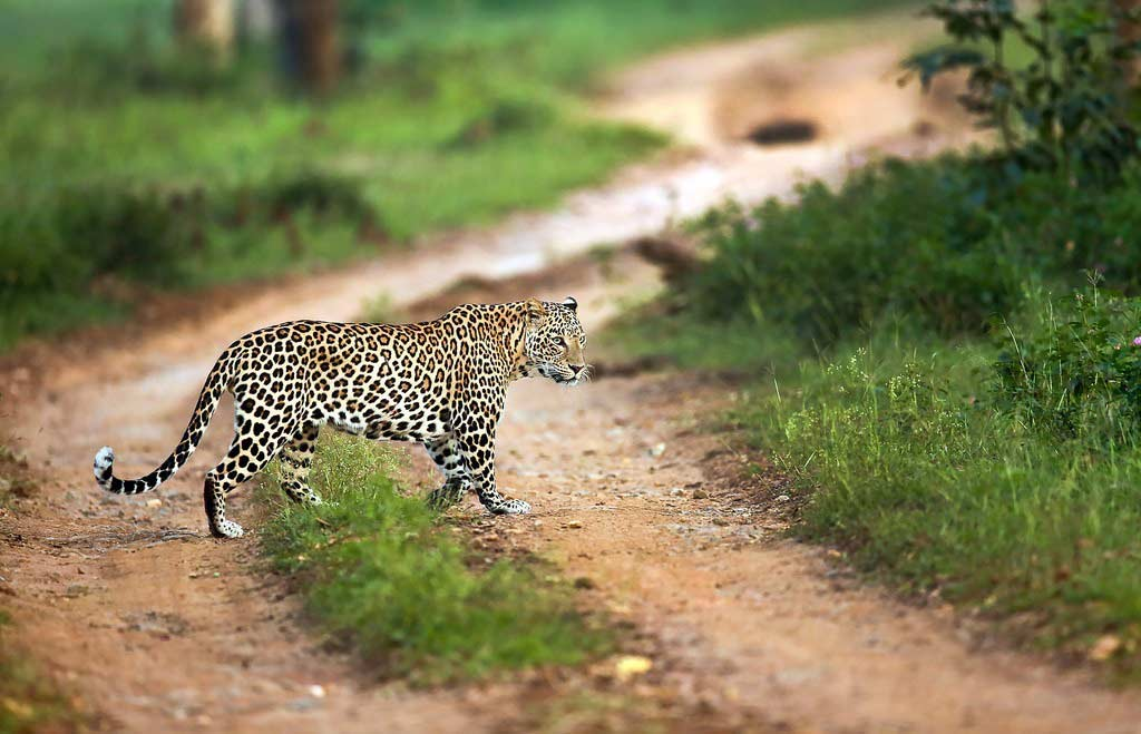 Bandipur National Park in Karnataka