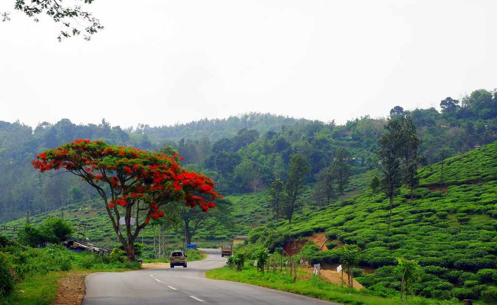 Must Visit Hill Stations Of South India