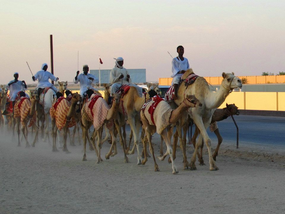 Al Shahaniya Camel Race