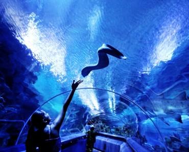 aquaria kuala lumpur