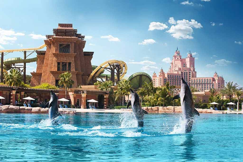 Experience The Dolphin Bay Atlantis Dubai
