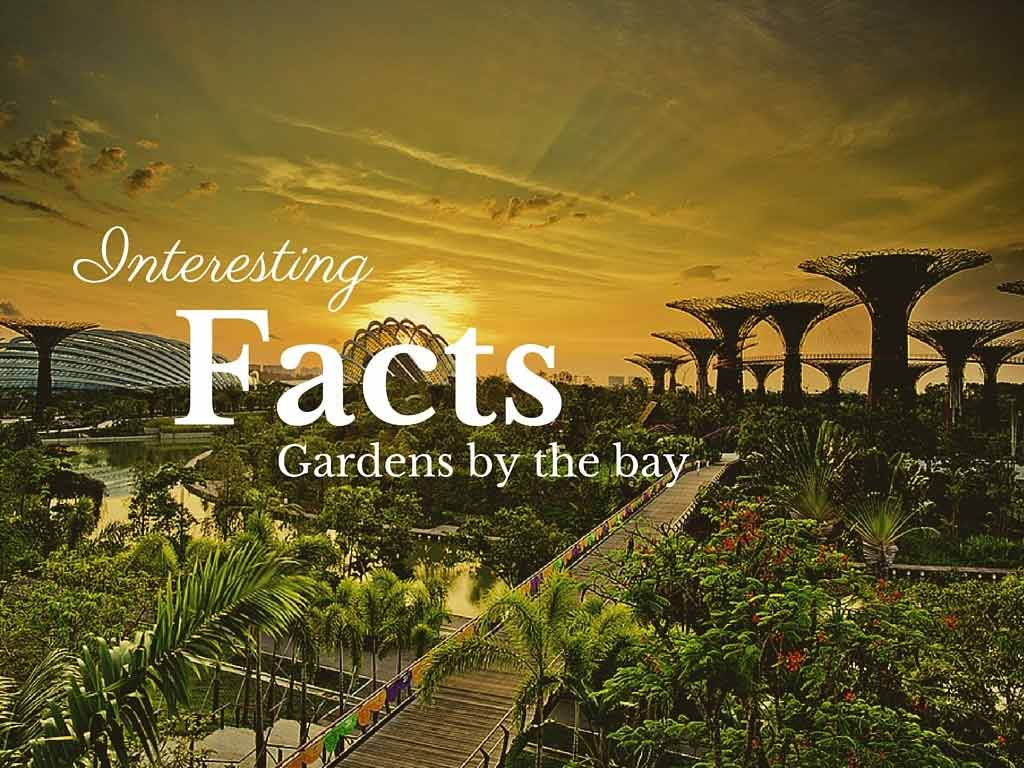 Garden By The Bay Fireworks interesting facts about gardensthe bay that will blow your mind