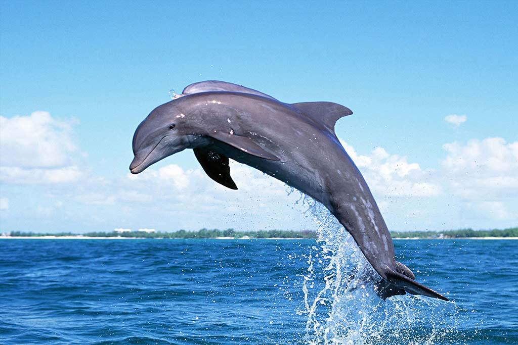 Dolphin Ride Goa