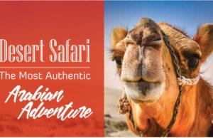 desert-safari-infograph