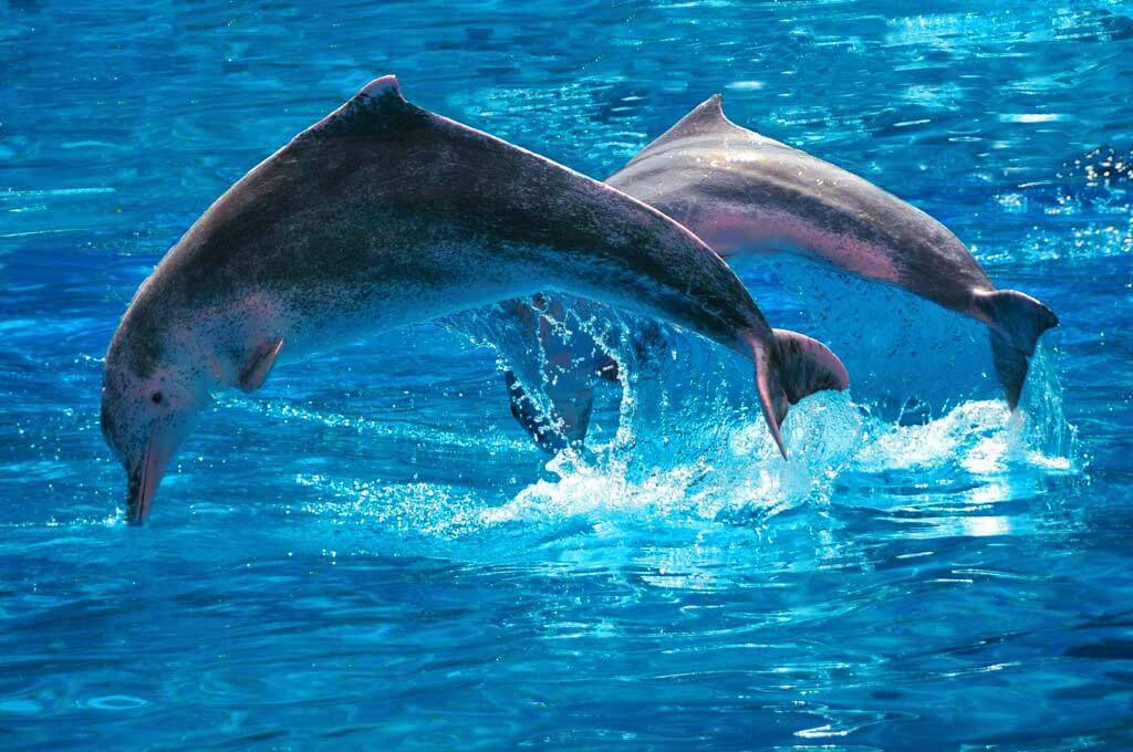 sentosa dolphin lagoon