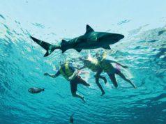 Snorkel in Dubai