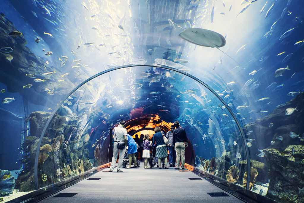 sea tank in Dubai