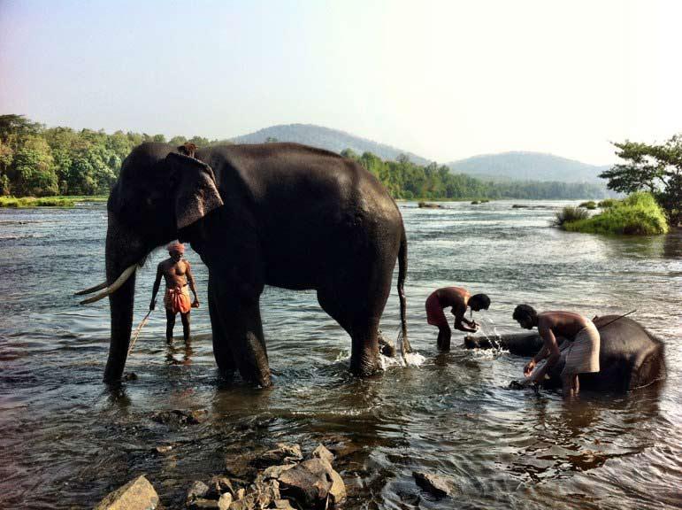 elephant bathing Kodanad