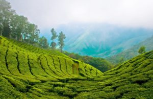 Hill station in Munnar