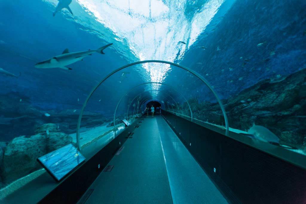 занятых океанариумы мира с фото что работаю