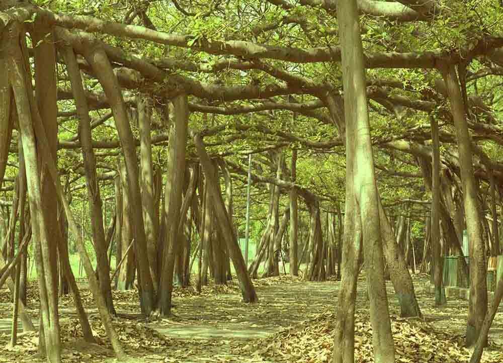 Acharya Jagadish Chandra Bose Indian Botanic Garden