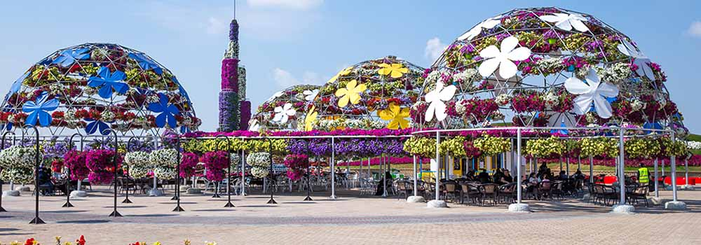 Dubai Miracle Garden Attractions Tickets Timings Location